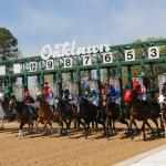 Dan's Double: Oaklawn Opener, Gulfstream Stakes