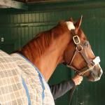 Emotional Goodbye for Champion, Fan Favorite California Chrome