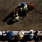 Does Weight Matter When Betting Racehorses?