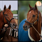 SLIDESHOW: Meet the 2019 Pegasus World Cup Contenders