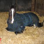 Horse Lover's Guide to Staying Inside, Part 4
