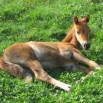 Cute Foals of the Week: Feb. 18, 2020