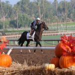 Nineteen Horse-o'-Lanterns for National Pumpkin Day