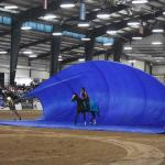 Seven Things to Know About the 2021 Thoroughbred Makeover