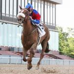 2020 Triple Crown Trail: Owner Callaghan Talks Swiss Skydiver, Battling Boys in Blue Grass