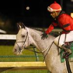 Evaluating 2020 Kentucky Derby Hopeful Silver Prospector