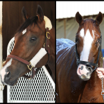 SLIDESHOW: Meet the 2019 Kentucky Derby Contenders