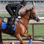 Justin Zayat Talks Solomini's Derby Chances and American Pharoah