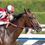 Making Money Betting Songbird in Cotillion Stakes