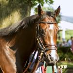 Songbird: 'Everything You'd Want in a Racehorse'