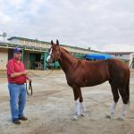 Fate Brings Improbable Bucchero Team to Breeders' Cup
