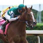 Stellar Wind Could Take on Boys in Pegasus World Cup