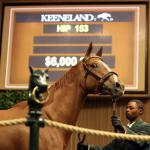 Million-Dollar Mares: Where They're Headed Now