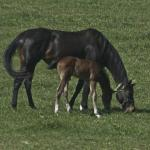 Cute Foals of the Week for Jan. 26