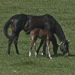 Cute Foals of the Week for Jan. 19