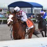 Tiz the Law Flawless in Florida Derby