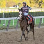 Jack Knowlton Diary: Mapping a Route to the Derby with Tiz the Law