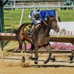 Classy Elate Makes It Look Easy in Delaware Handicap