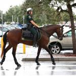 Retired Racehorses Rule: Police Horse Named Thoroughbred of the Year