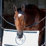 One-Eyed Horse Patch Among Finalists for Secretariat Vox Populi Award