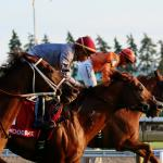 Best Bets: Woodbine Longshots, Blinkers Added at Belmont