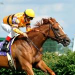 Wise Dan: Champion of a Lifetime