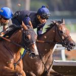American Pharoah's Sister, American Cleopatra, Set for Debut
