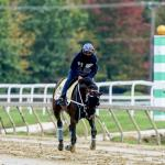 Amazing Journey for D'Angelo, Breeders' Cup Hopeful Jesus' Team