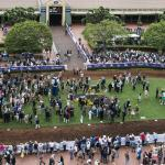 How to Approach the Many Betting Options on Breeders' Cup Day