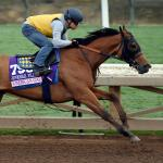 Live Longshots and Value Plays for the 2016 Breeders' Cup