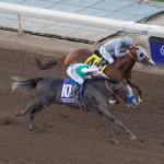 Hangin' With Haskin: Arrogate Adds Intrigue to Pegasus Cup