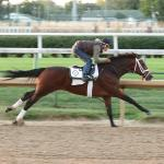 Key Takeaways from the Weekend's Races and Preakness Workouts