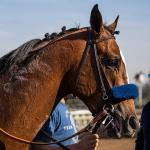 Authentic a Formidable Presence on 2020 Kentucky Derby Trail