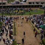 Breeders' Cup Mile Tip Sheet: Using Trends to Help Spot the Winner