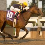 Boardroom the Top Pick in Saturday's Whimsical Stakes