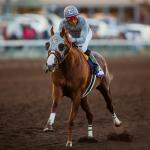 California Chrome Cruises in Winter Challenge Stakes