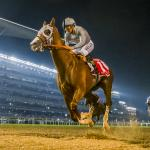 California Chrome's Connections Target Pegasus World Cup
