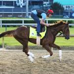 Three Live Longshots, 15-1 Win Contender to Consider for Kentucky Derby