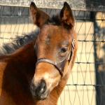 Cute Foals of the Week for Feb. 19