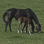 Cute Foals of the Week for March 26