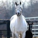 Cute Foals of the Week for Feb. 26