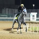 America's Best Horses for April 19