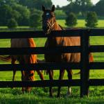Visit Horse Country: Star Stallion Power Fuels Gainesway's Success