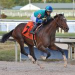 2021 Fountain of Youth Stakes Cheat Sheet