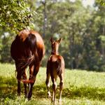 Visit Horse Country: Hermitage Farm Connects Rich History to Modern Vision