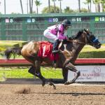 Game Winner Tunes Up for Travers with Los Alamitos Derby Win