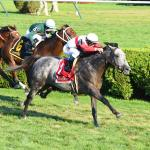 A Value Bet and an Upset Play in Shadwell Turf Mile