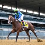 What to Know About 'Future Stars Friday' Breeders' Cup Races