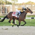 Evaluating Longshot Tampa Bay Derby Winner King Guillermo's Derby Potential