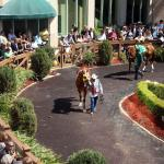 Where to Watch/Listen During Florida and Louisiana Derby Week